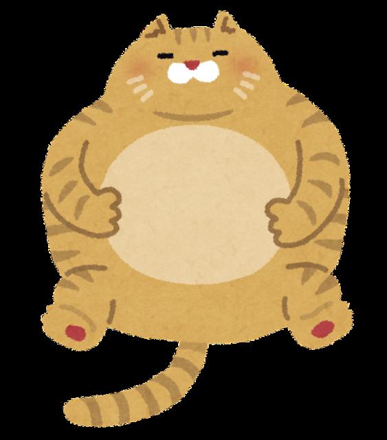 pet_fat_cat.png